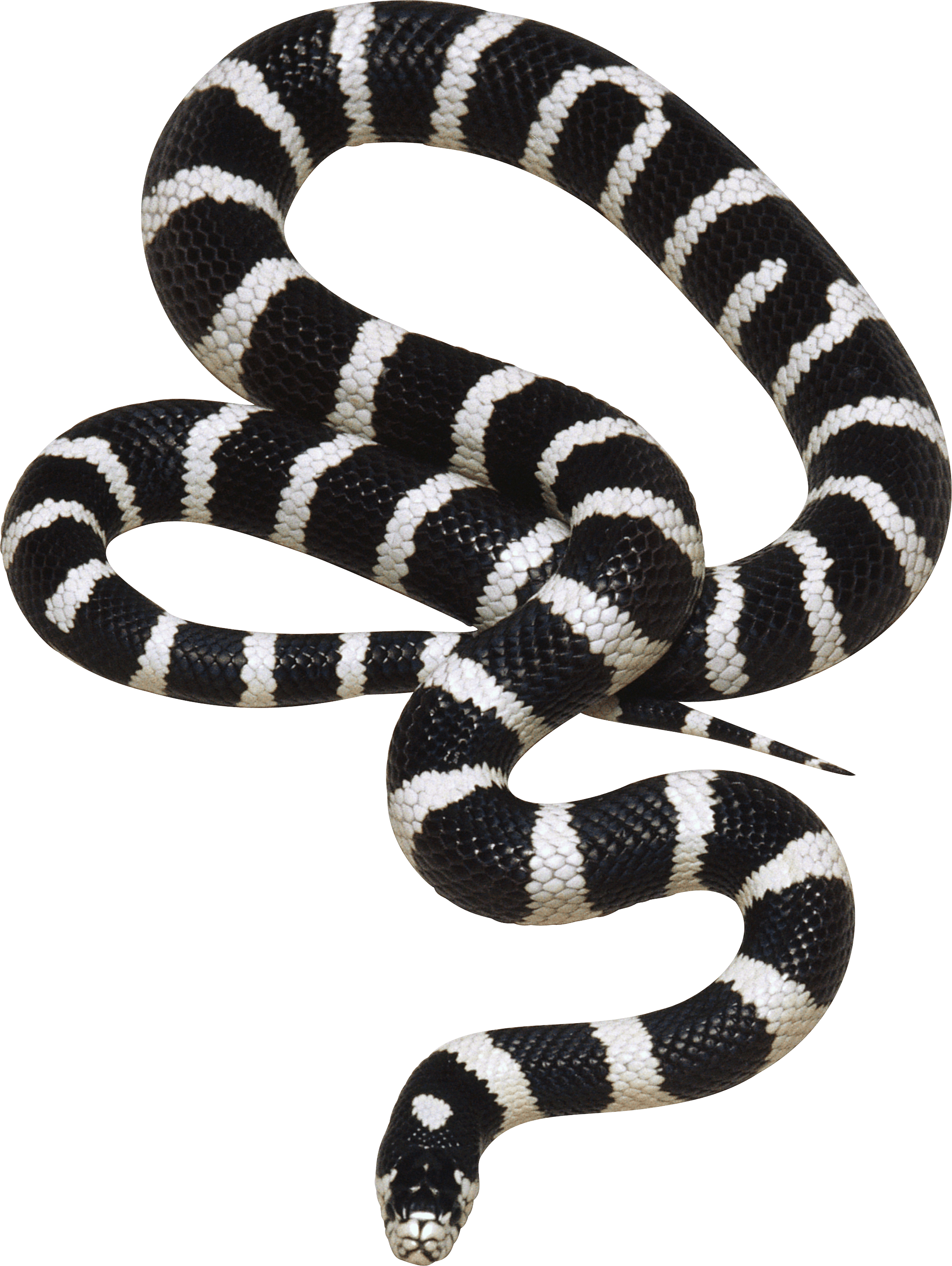 Black and White Snake PNG Image.