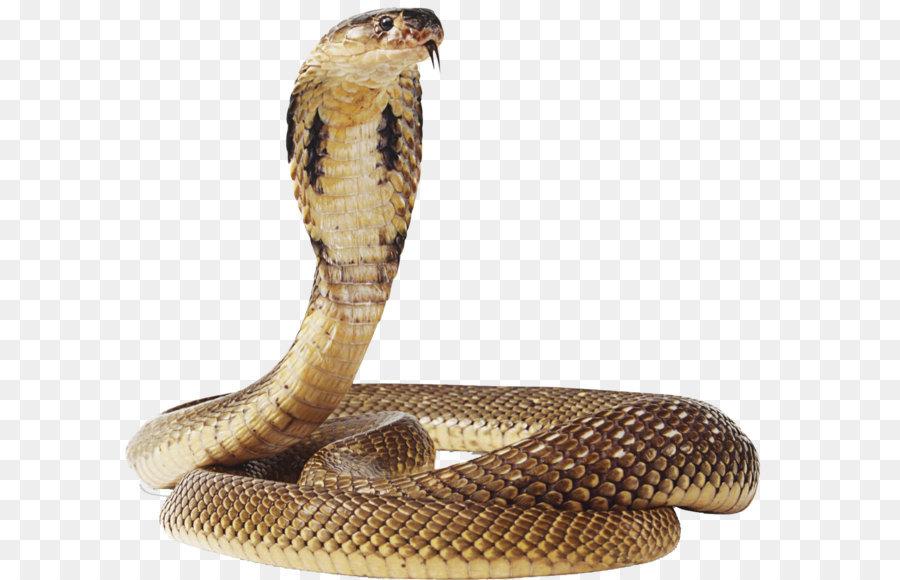 Snake Cartoon png download.