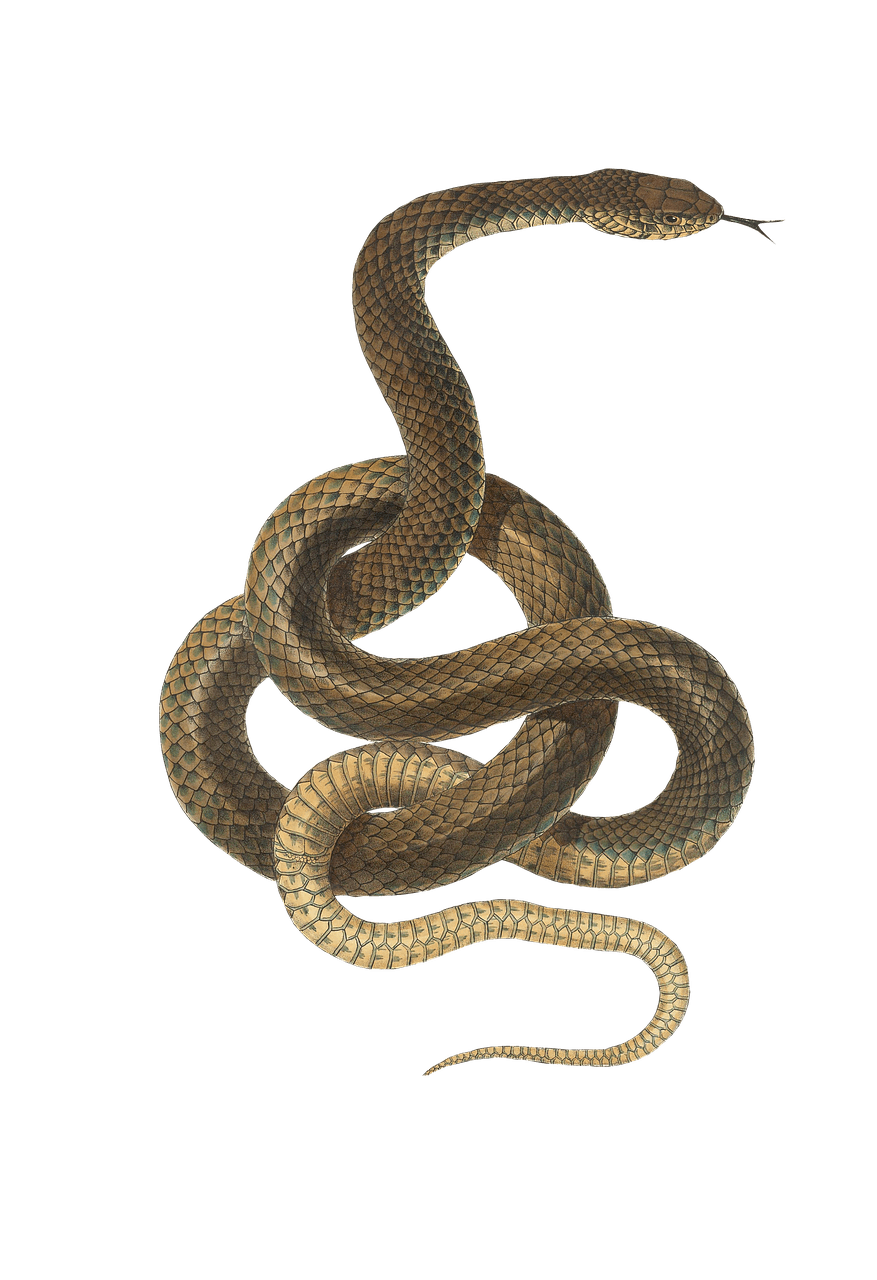 Snake Light Brown transparent PNG.