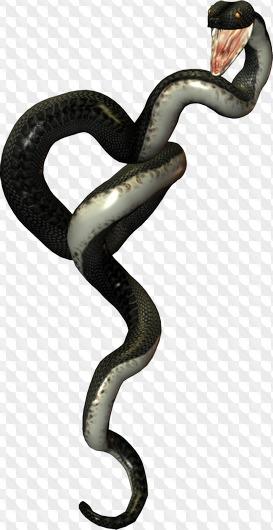 Stock Black Snakes 5 PNG images on transparent background.