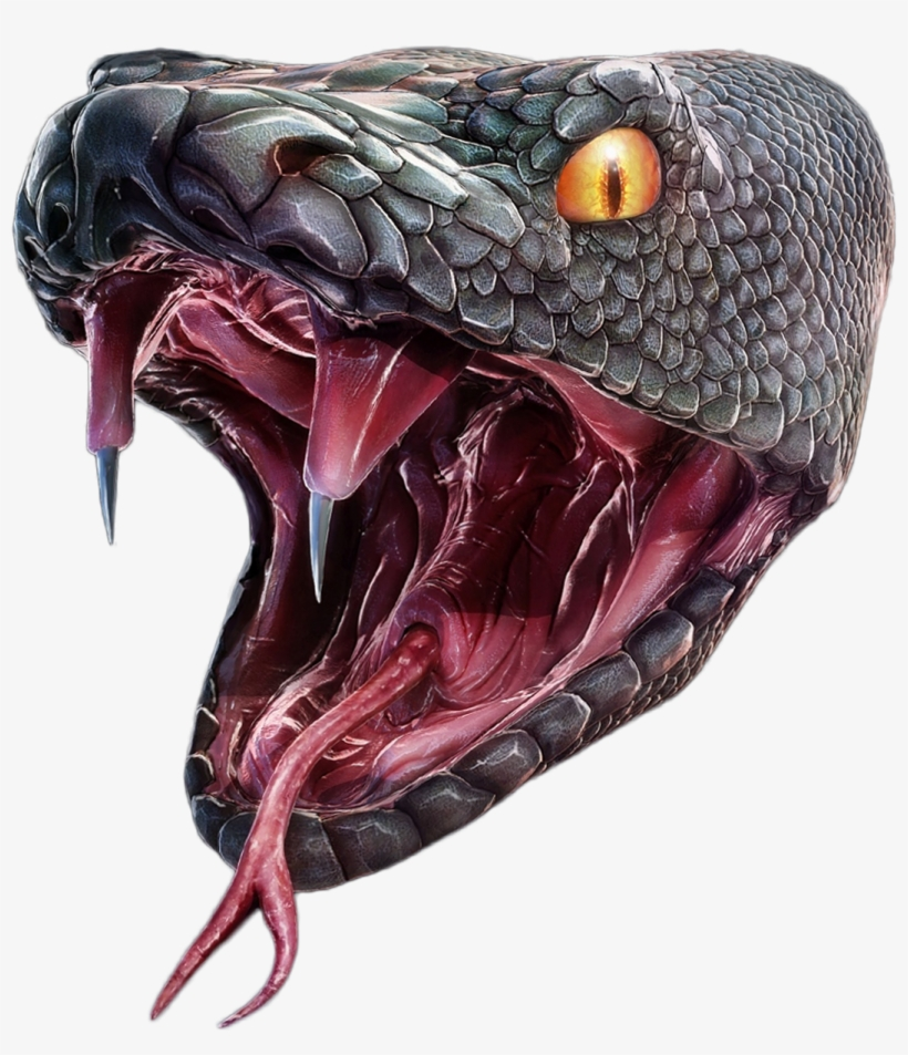 Snake Head Png.