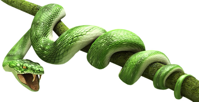 Snake PNG image, free download png picture snakes.
