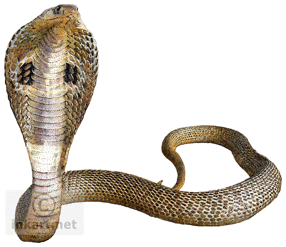 Snake PNG Images Transparent Free Download.
