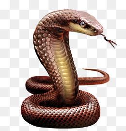 Snake PNG Images.