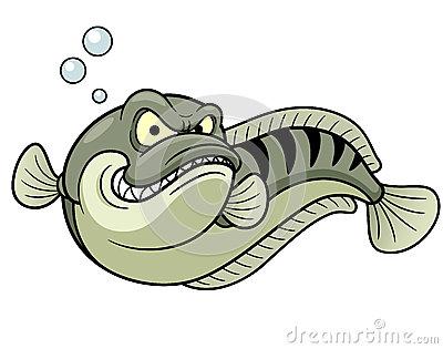 Giant Snakehead Fish Royalty Free Stock Photo.