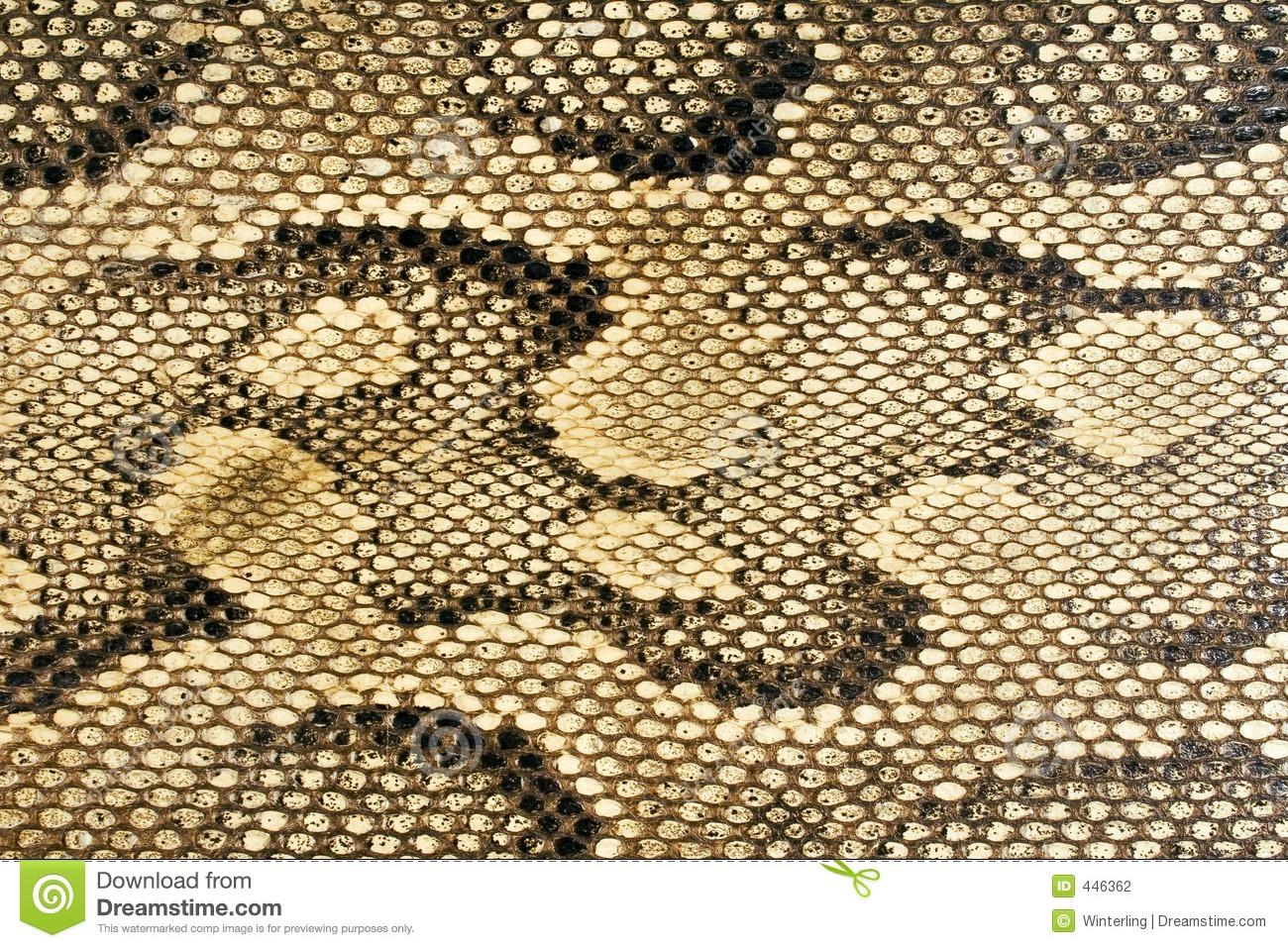Snake skin clipart.