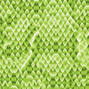 Snakeskin Clip Art Download.