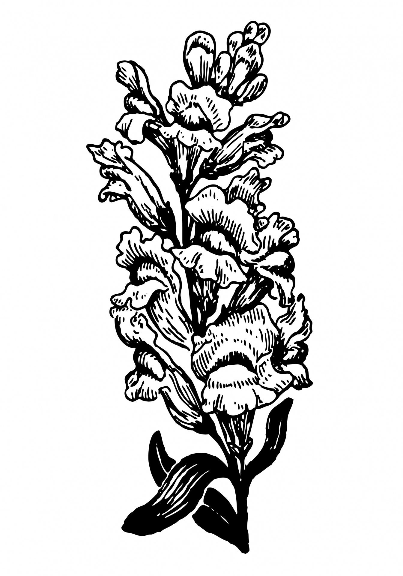 Snapdragon Flower Clip Art.