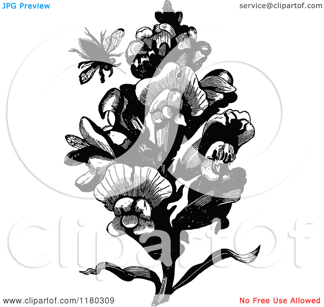 Clipart of a Retro Vintage Black and White Bee and Snap Dragon.