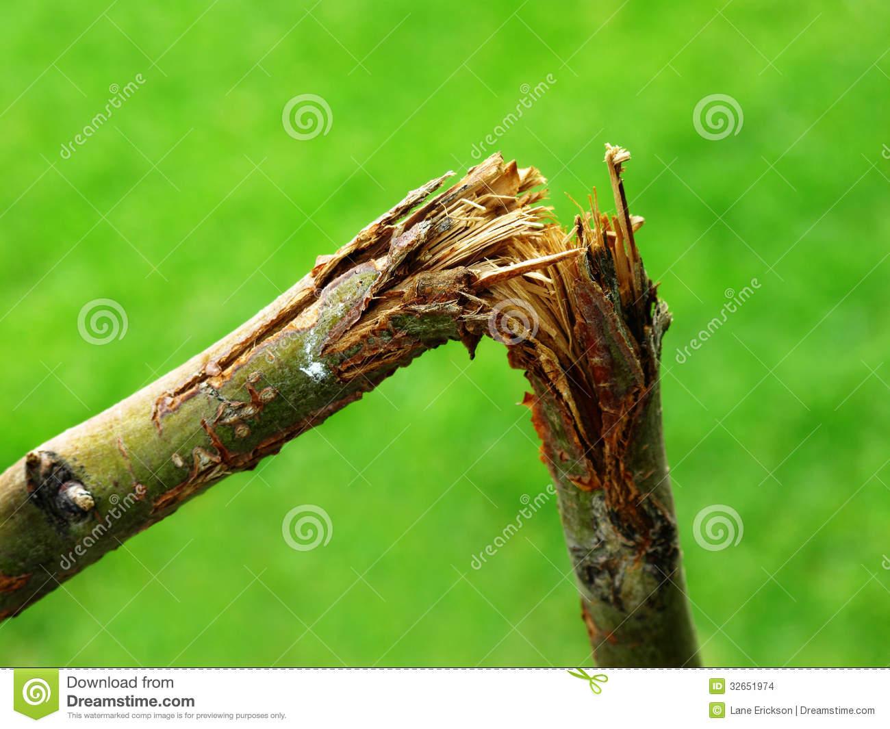 Broken Branch Stock Images.