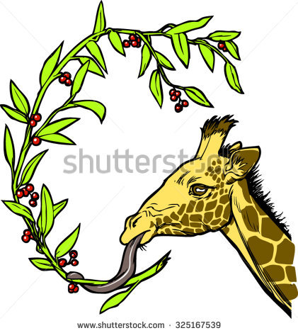 A Giraffe'S Head, Eating A Branch Containing (Green) Leaves And.