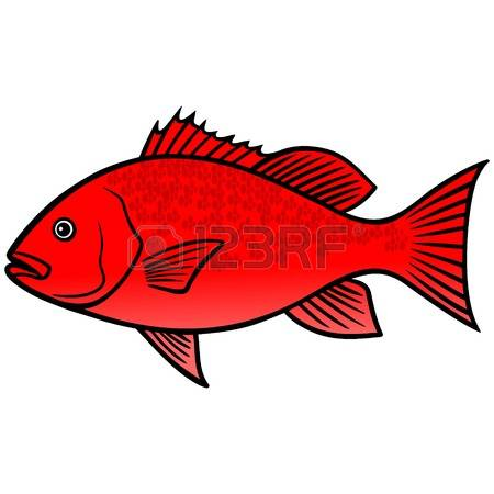 97 Red Snapper Stock Illustrations, Cliparts And Royalty Free Red.