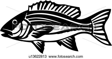 Snapper Clip Art Royalty Free. 264 snapper clipart vector EPS.
