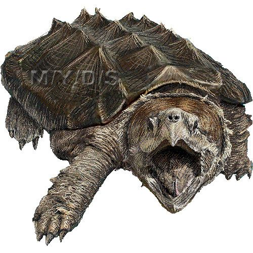 snapping turtle clip art #10