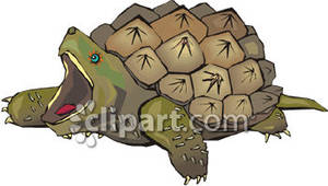 Turtle snapping clipart.