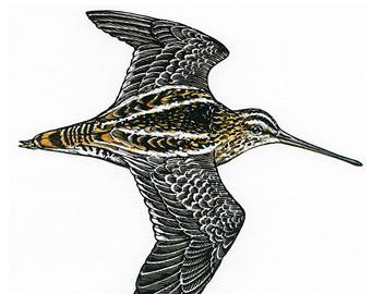 Bird illustration Kea and Tui bird art print of original by.