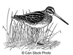 Snipe Stock Illustration Images. 176 Snipe illustrations available.