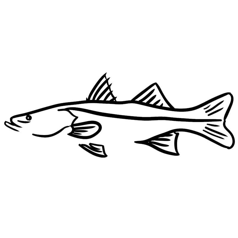 Fish Snook Promotion.