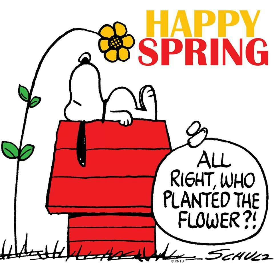 Snoopy spring clipart 8 » Clipart Station.