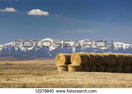 Stock Photography of Two rows of stacked hay bales in a stubble.