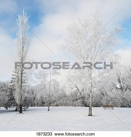 Stock Photo of winnipeg, manitoba, canada; snow covering the trees.