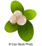 Snowberry Clip Art Vector and Illustration. 19 Snowberry clipart.