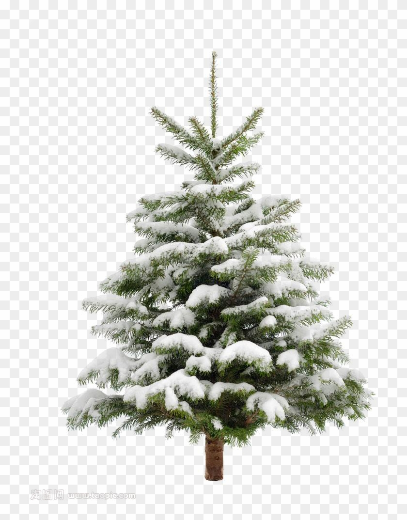 Pine Tree Snow Christmas Fir Trees Transprent Clip, HD Png.