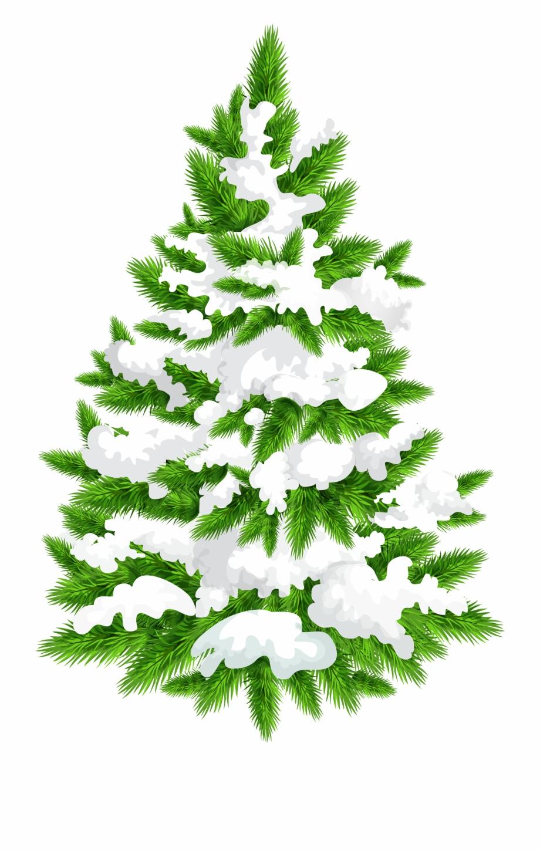 Snowy Pine Tree Png.