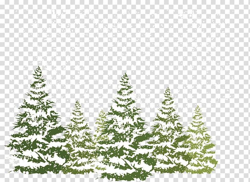 Pine trees pour with snow , Pine Fir Spruce Snow, Pine.