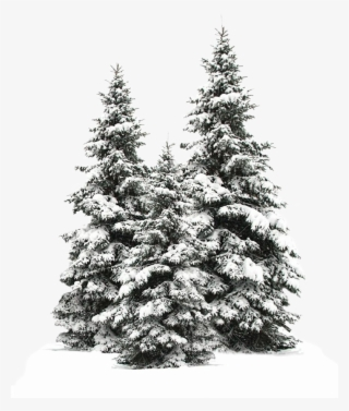 Snowy Tree PNG, Transparent Snowy Tree PNG Image Free.