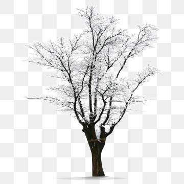 Winter Tree Png, Vector, PSD, and Clipart With Transparent.
