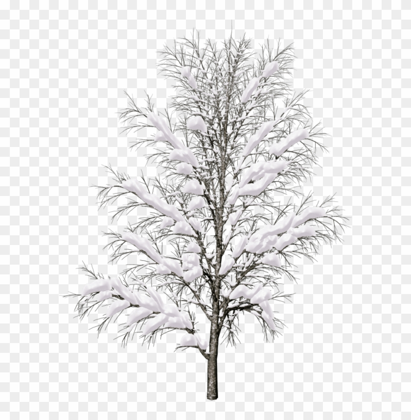 10 Tree Png Images For Architecture, Landscape.