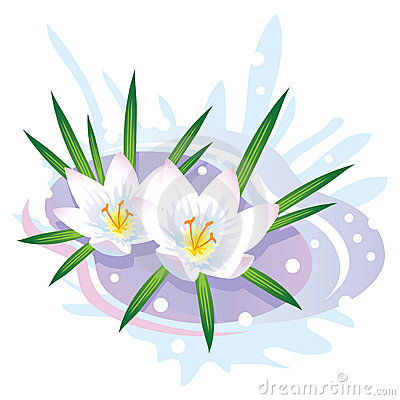 Crocus Flower. The First Spring Flowers And Snow. Stock.