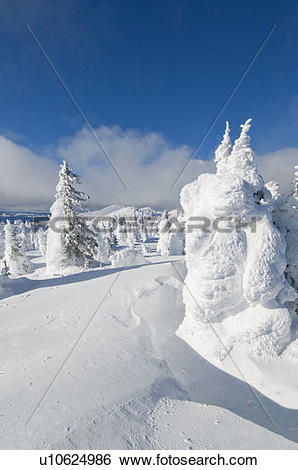 Stock Images of Snow ghosts at the top of Sun Peaks Ski Resort.