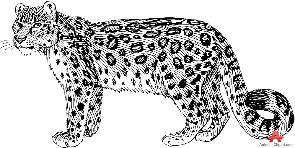 Free Snow Leopard Cliparts, Download Free Clip Art, Free.