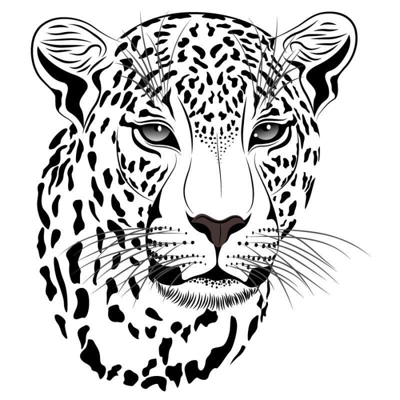 Snow leopard clipart 4 » Clipart Station.
