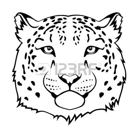 265 Snow Leopard Stock Vector Illustration And Royalty Free