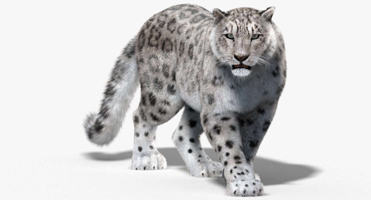 Snow Leopard Png (108+ images in Collection) Page 3.