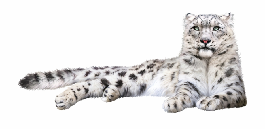 Snow Leopard Png , Png Download.