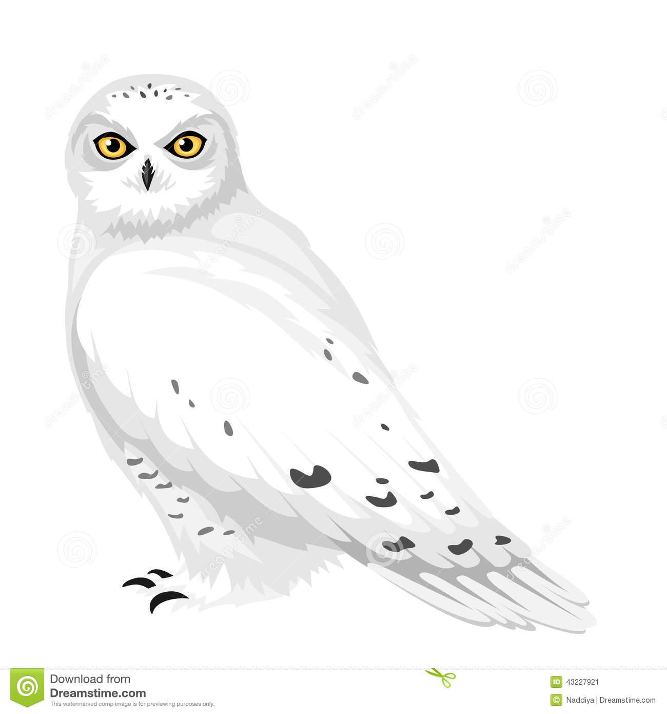Snowy Owl Clipart.