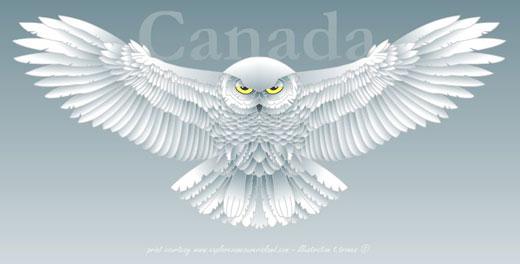 snowy owl clip art.