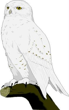 Snowy owl clipart 20 free Cliparts | Download images on ...