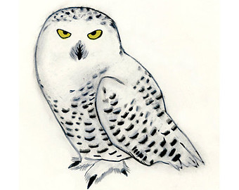 Snowy Owl Clipart Clipground