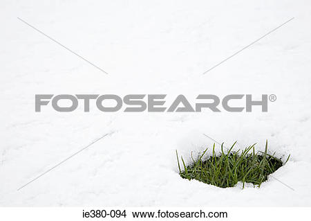 Stock Photo of Patch of grass in thawing snow ie380.