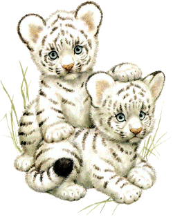 Snow tiger clipart.