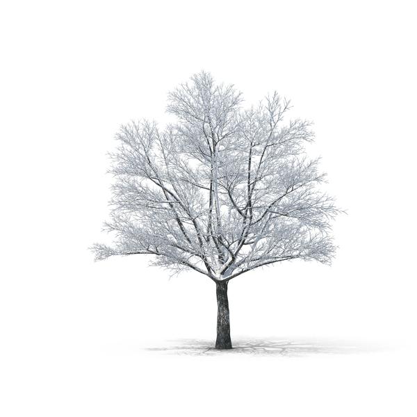 Bare Tree PNG Images & PSDs for Download.