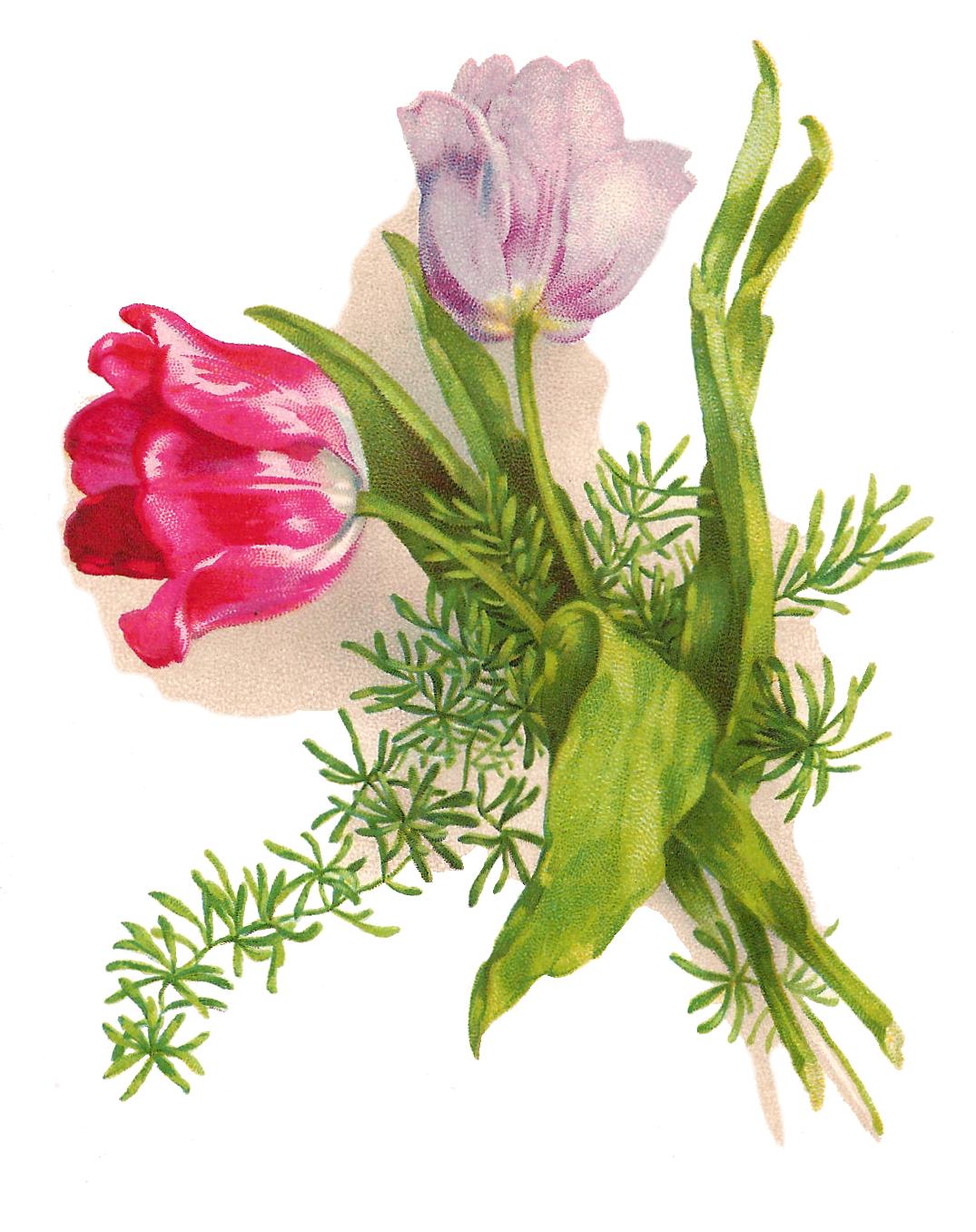 snowball flower clipart