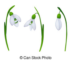 Snowdrop Illustrations and Clipart. 1,163 Snowdrop royalty free.