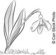 Snowdrop Illustrations and Clipart. 2,798 Snowdrop royalty.