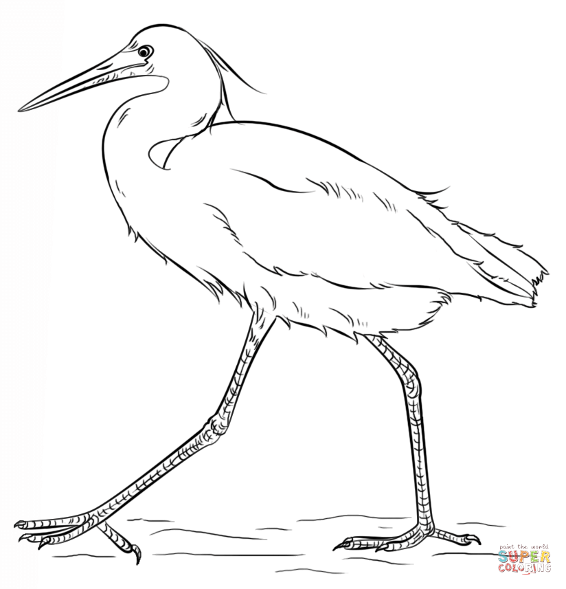 Egrets coloring pages.